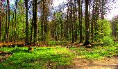 Trail Walk LONGPONT - en forêt de Retz_24_Longpont_MF du Rond de la Reine_AR - Photo 92