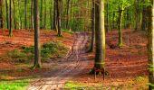 Trail Walk LONGPONT - en forêt de Retz_24_Longpont_MF du Rond de la Reine_AR - Photo 58