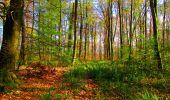 Trail Walk LONGPONT - en forêt de Retz_24_Longpont_MF du Rond de la Reine_AR - Photo 62