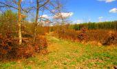 Trail Walk LONGPONT - en forêt de Retz_24_Longpont_MF du Rond de la Reine_AR - Photo 139