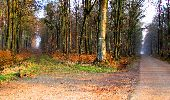 Trail Walk LONGPONT - en forêt de Retz_24_Longpont_MF du Rond de la Reine_AR - Photo 18