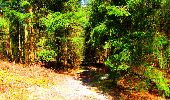 Trail Walk LONGPONT - en forêt de Retz_24_Longpont_MF du Rond de la Reine_AR - Photo 142
