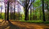 Trail Walk LONGPONT - en forêt de Retz_24_Longpont_MF du Rond de la Reine_AR - Photo 74