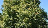 Trail Motor Houyet - Circuit roadbook auto/moto - Paysages et beautés naturelles - 360° - Photo 3
