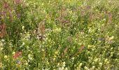 Trail Walk Nendaz - Bisse de Salins 03.06.14 - Photo 4