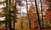 Trail Walk LUTZELHOUSE - Rocher de Mutzig - Lutzelhouse - Photo 6