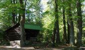 Trail Walk LUTZELHOUSE - Rocher de Mutzig - Lutzelhouse - Photo 2
