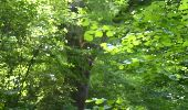 Trail Walk CHATEL-GUYON - Boucle de Rochepradière en passant par Douhady - Photo 10