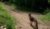 Trail Walk CHATEL-GUYON - Boucle de Rochepradière en passant par Douhady - Photo 8