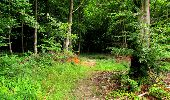 Randonnée Marche LONGPONT - en forêt de Retz_25_Longpont_MF du Buchet_AR - Photo 19