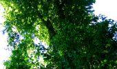 Randonnée Marche LONGPONT - en forêt de Retz_25_Longpont_MF du Buchet_AR - Photo 61
