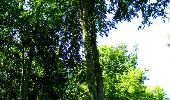 Randonnée Marche LONGPONT - en forêt de Retz_25_Longpont_MF du Buchet_AR - Photo 62