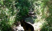 Randonnée Marche CHATEL-GUYON - Chazeron sans souci - Photo 1
