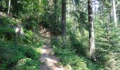 Randonnée Marche DABO - Balade au Col de la Schleif - Photo 5