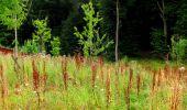 Trail Walk LONGPONT - en forêt de Retz_27_Longpont_Montgobert_Puiseux_AR - Photo 146