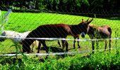 Trail Walk LONGPONT - en forêt de Retz_27_Longpont_Montgobert_Puiseux_AR - Photo 12