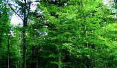 Randonnée Marche LONGPONT - en forêt de Retz_27_Longpont_Montgobert_Puiseux_AR - Photo 96