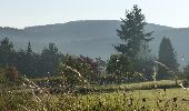 Randonnée Marche Wellin - Halma-Molinchamps (WE 09) - Photo 1