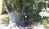 Randonnée Marche SAINT-JULIEN-EN-BORN - St Julien en Born - Photo 3