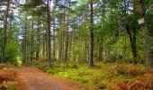 Trail Walk LONGPONT - en forêt de Retz_29_Longpont_la cave du Diable_A - Photo 243