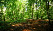Trail Walk LONGPONT - en forêt de Retz_29_Longpont_la cave du Diable_A - Photo 171