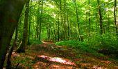 Trail Walk LONGPONT - en forêt de Retz_29_Longpont_la cave du Diable_A - Photo 169