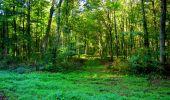 Trail Walk LONGPONT - en forêt de Retz_29_Longpont_la cave du Diable_A - Photo 82