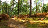 Trail Walk LONGPONT - en forêt de Retz_29_Longpont_la cave du Diable_A - Photo 219