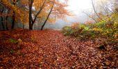 Trail Walk LONGPONT - en forêt de Retz_29_Longpont_la cave du Diable_A - Photo 12