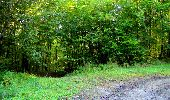 Trail Walk LONGPONT - en forêt de Retz_29_Longpont_la cave du Diable_A - Photo 64
