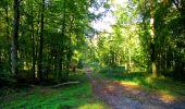 Trail Walk LONGPONT - en forêt de Retz_29_Longpont_la cave du Diable_A - Photo 81
