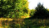 Trail Walk DAMPLEUX - en forêt de Retz_80_sur la Route Tortue et la Route Droite - Photo 185
