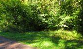 Trail Walk DAMPLEUX - en forêt de Retz_80_sur la Route Tortue et la Route Droite - Photo 221