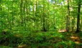 Trail Walk LONGPONT - en forêt de Retz_29_Longpont_la cave du Diable_A - Photo 168
