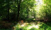 Trail Walk DAMPLEUX - en forêt de Retz_80_sur la Route Tortue et la Route Droite - Photo 220