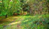 Trail Walk LONGPONT - en forêt de Retz_29_Longpont_la cave du Diable_A - Photo 254