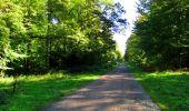 Trail Walk DAMPLEUX - en forêt de Retz_80_sur la Route Tortue et la Route Droite - Photo 204