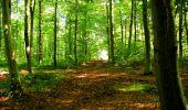 Trail Walk LONGPONT - en forêt de Retz_29_Longpont_la cave du Diable_A - Photo 170