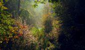 Trail Walk LONGPONT - en forêt de Retz_29_Longpont_la cave du Diable_A - Photo 35