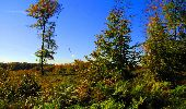 Trail Walk LONGPONT - en forêt de Retz_29_Longpont_la cave du Diable_A - Photo 120