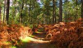 Trail Walk LONGPONT - en forêt de Retz_29_Longpont_la cave du Diable_A - Photo 252