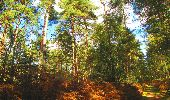 Trail Walk LONGPONT - en forêt de Retz_29_Longpont_la cave du Diable_A - Photo 220