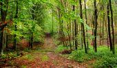 Randonnée Marche LONGPONT - en forêt de Retz_28_Longpont_Cabaret_A - Photo 162