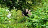 Randonnée Marche LONGPONT - en forêt de Retz_28_Longpont_Cabaret_A - Photo 45