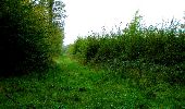 Randonnée Marche LONGPONT - en forêt de Retz_28_Longpont_Cabaret_A - Photo 195