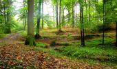 Randonnée Marche LONGPONT - en forêt de Retz_28_Longpont_Cabaret_A - Photo 75