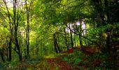 Randonnée Marche LONGPONT - en forêt de Retz_28_Longpont_Cabaret_A - Photo 170