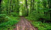 Randonnée Marche LONGPONT - en forêt de Retz_28_Longpont_Cabaret_A - Photo 167