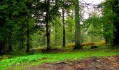 Randonnée Marche LONGPONT - en forêt de Retz_28_Longpont_Cabaret_A - Photo 47