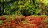 Randonnée Marche LONGPONT - en forêt de Retz_28_Longpont_Cabaret_A - Photo 172